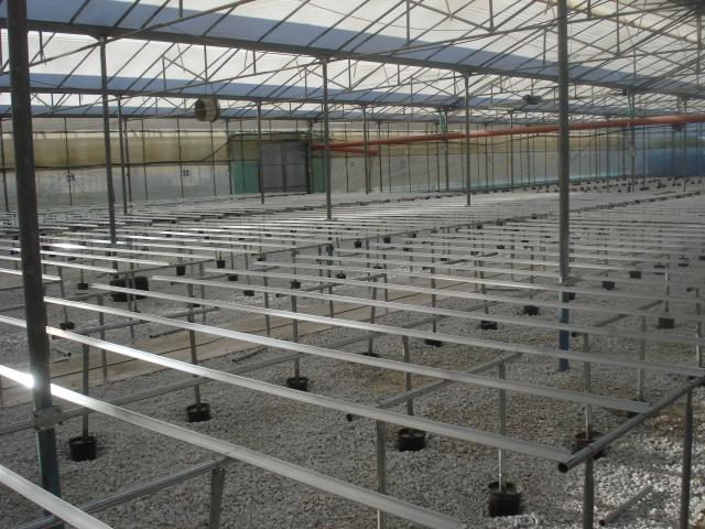 Benches installation in a large-scale greenhouse unit